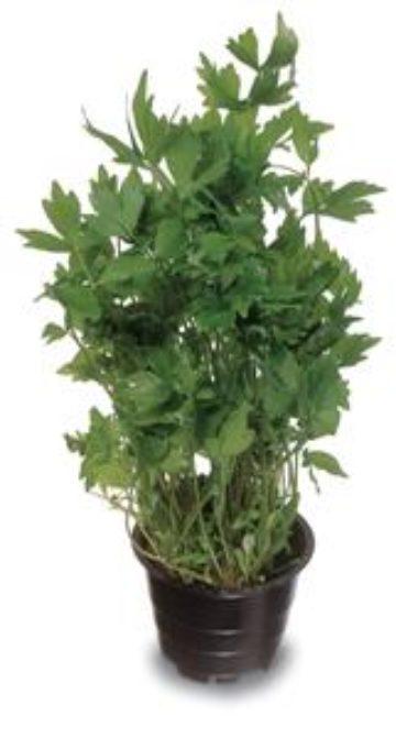 Planti Oat Smoothie Raspberry &Licorice